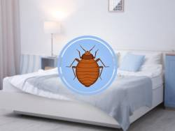 Can Bed Bugs Live in Tempurpedic Mattresses?