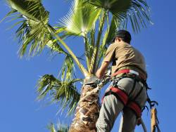 What Are the Best Tools to Trim Palm Trees?